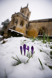 © Licensed to London News Pictures. 05/03/2016. Chipping Norton. Oxfordshire. Chipping Norton ChurchSnow in Oxfordshire early morning on 5th March 2016.. Photo credit : MARK HEMSWORTH/LNP
