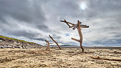 Driftwood arranged as sculpture under a stormy sky on the beach at Instow North Devon UK