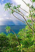 Lush vegetation and squall over the Pacific from the Kalalau Trail, Na Pali Coast, Island of Kauai, Hawaii