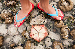 starfish and feet of a man, Koh Lipe, Thailand