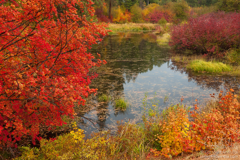 A variety of trees and shrubs display their fall colors along the banks of Nason Creek, east of Stevens Pass in Washington state.