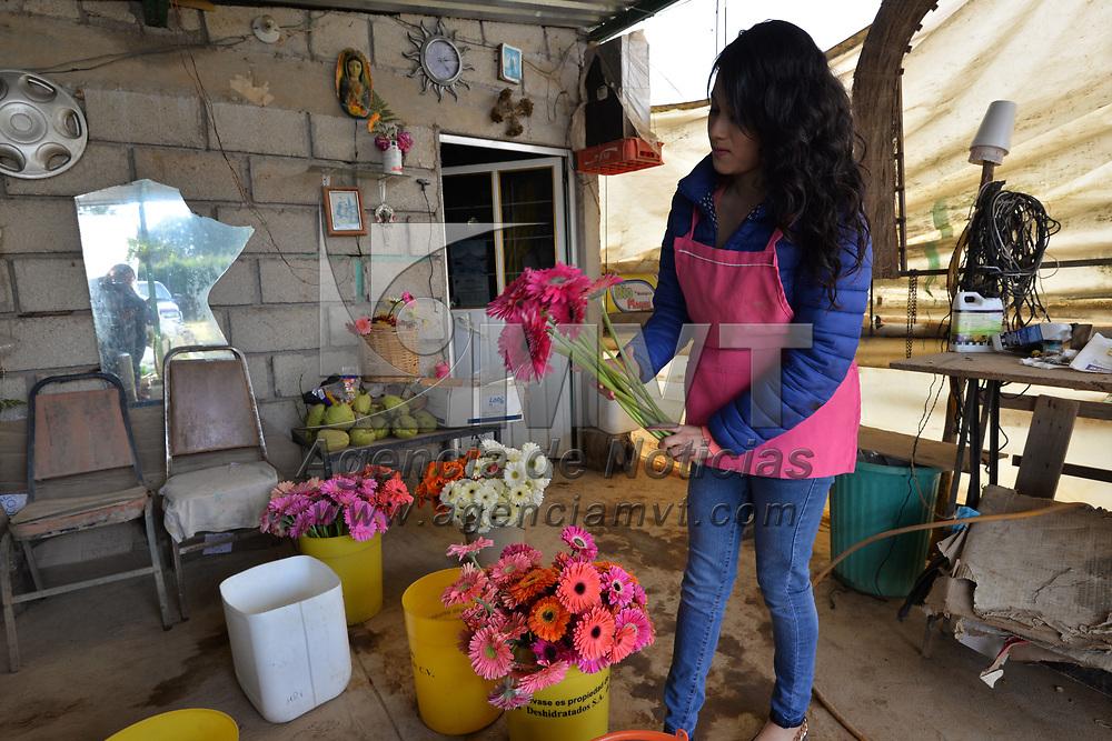 TENANCINGO, México.- (Enero 24, 2018).- Las bajas temperaturas han afectado la producción de flores como las rosas y  la gerbera, sobre todo a pequeños productores de Tenancingo, aunque vienen fechas fuertes en venta de flores como el 14 de febrero y el Día de la Madre, esperan poder cumplir con sus compromisos. Agencia MVT / Crisanta Espinosa.