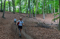 In training for the Camino 2020 on the N70 hiking route, in the Rijk van Nijmegen you can climb no less than 8 mountains, including the famous Duivelsberg. The route is tough, but the reward is sweet: phenomenal views over chestnut forests, Waal & Ooijpolder on June 27, 2020 in Berg en Dal.