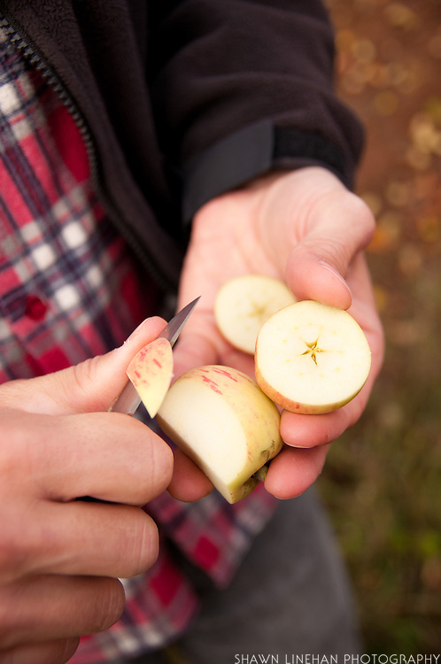 James Kohn checks a cider apple on his orchard at Wandering Aengus Cidery in Salem, Oregon