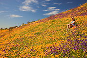 A visitor enjoying the wildflowers, primarily California Poppy (Papaveraceae: Eschscholzia californica) and Parry Phacelia (Hydrophyllaceae: Phacelia parryi) in the burned hills of San Diego County from the 2007 Witch Creek fire near Lake Hodges, California.  (model released)