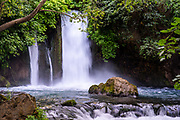 Hermon Stream Nature reserve (Banias) Golan Heights Israel This stream is one of the sources of the Jordan River