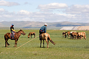 Horses and horse riding at Gun Galuut, Mongolia