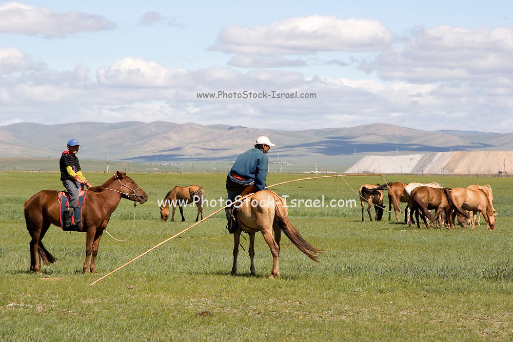 Horses and horse riding at Gun Galuut, Mongolia