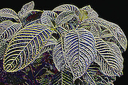 Tropical stiped leaves in a relief design Photo art images with 3D, bas relief effect and simulated metallic photos