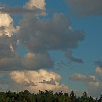 Thunderheads tower above white pines on islands amidst Lake of the Woods,  Ontario, Canada.