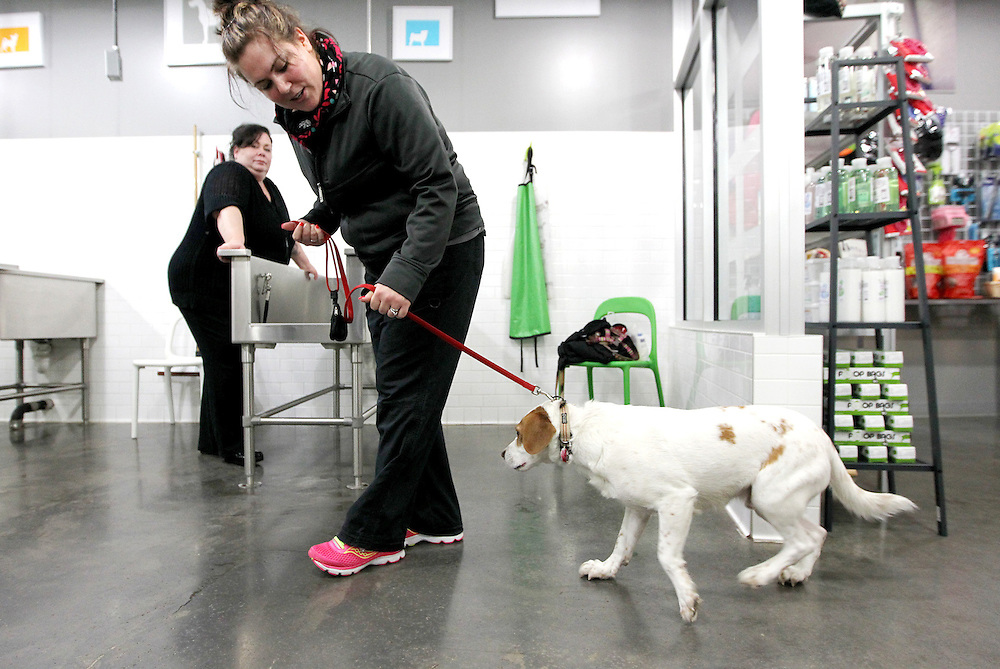 Manager and groomer Kelsey Fesenmaier leads Buddy to the back for a quick nail trim before his owner gives him a bath in the self-serve dog wash area at Ollu Dog Salon in Minneapolis November 14, 2012.