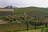 Le colline e i vigneti intorno a Neive, sullo sfondo. The hills and vineyards around Neive in the background.