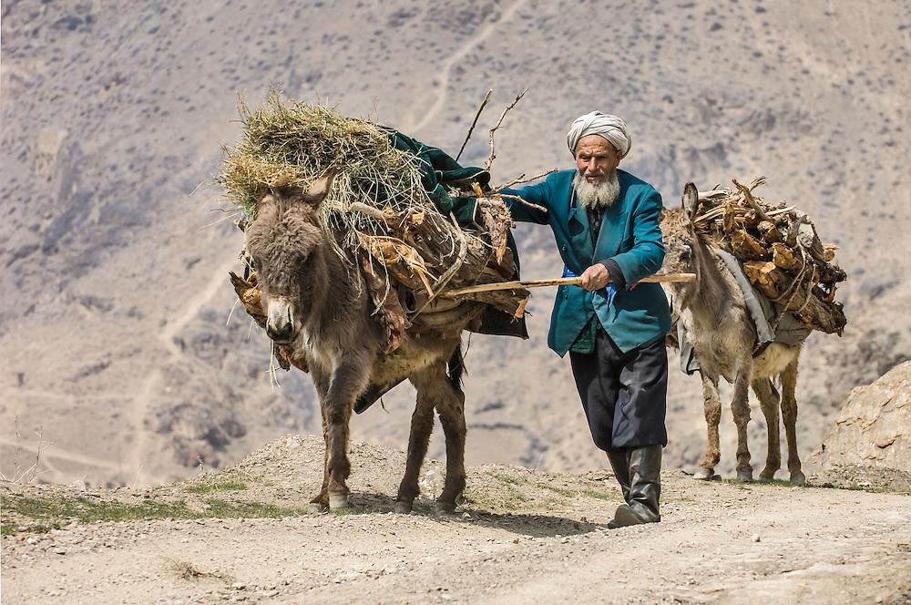 Portrait of an old Tajik man urging his fodder-laden donkeys along a dusty road