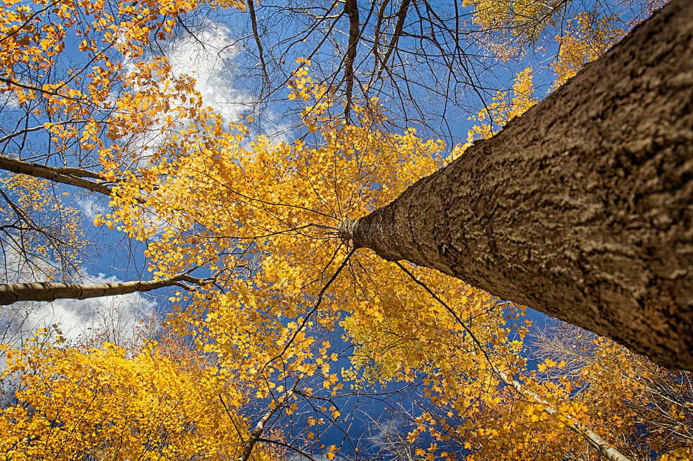 There are days in Autumn that one must send their eyes skyward and just watch the clouds go by