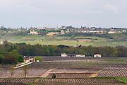 vineyard chateau d'yquem sauternes bordeaux france