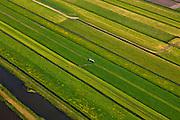 Nederland, Utrecht, Gemeente Stichtse Vecht, 13-05-2011; klassiek veenweide polderlandschap ontstaan door het winnen van veen (vervening), stroken verkaveling. Polder Westbroek, trekker rijdt mest uit.Typical Dutch peatland polder (peat bog) landscape wit irregular pattern of drainage. Tractor spreads manure.luchtfoto (toeslag), aerial photo (additional fee required) foto/photo Siebe Swart