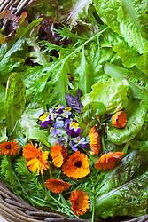 Mixed salad leaves in a basket. Lettuce 'Black Seeded Simpson', 'Cocarde', Cos Freckles', Solix, Red Giant Mustard', Mizuna, Green Snow Mustard. Calendula and Viola Heartsease flowers