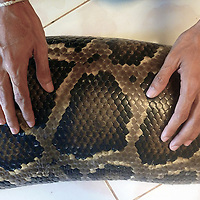 Cambodia | Setbo | Lifestyle | Friendship with a python