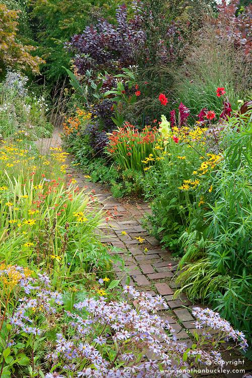 Brick path through the hot borders at Glebe Cottage. Dahlia 'Bishop of Llandaff', Rudbeckia fulgida var. deamii, Aster sedifolius, crocosmias, gladiolus and Cotinus coggygria Purpureus Group