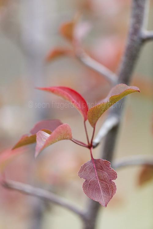 Autumn leaves, Trinity River Audubon Center, Dallas, Texas, USA.