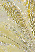 Palm leaves design, simulated gold relief