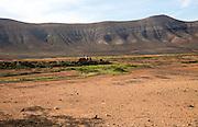 Dry volcanic landscape countryside near Oliva, Fuerteventura, Canary Islands, Spain