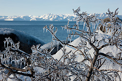 """""""Icicles at Lake Tahoe 2"""" - This icicle covered bush was photographed in the early morning as Sand Harbor, Lake Tahoe."""