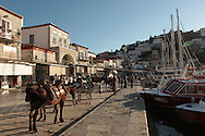 Horses and donkeys are the only transportation the no cars island of Hydra, Greece. Photograph by Dennis Brack