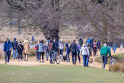 """© Licensed to London News Pictures. 27/03/2021. London, UK. Members of the public enjoy a walk in the sunshine in Richmond Park, South West London ahead of the end of the """"Stay at Home"""" advice from Monday with temperatures expecting to reach to 23c next week. On Monday 29 March, the """"Stay at Home"""" advice will end with people being allowed to meet up within the """"rule of six"""". Playing golf, tennis and organised outdoor sports will also be allowed as England starts to unlock after a year of Covid-19 restrictions. Photo credit: Alex Lentati/LNP"""
