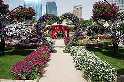 Dubai, 3rd April; The opening day of the first Dubai International Garden Competion. This is garden is called Where the Desert Blooms.