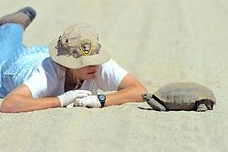 Kathie Meyer Observing Desert Tortoise
