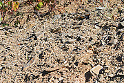 schist soil vineyard quinta do seixo sandeman douro portugal