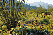 Springtime in the Anza-Borrego Desert State Park and Coyote Mountain, California, USA