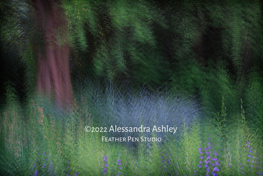 Late spring woodland blooms and grasses  framed by evergreen foliage. Multiple-exposure montage with soft glow and lightpainting added.