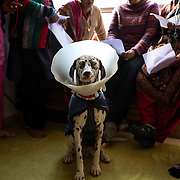 Members of the women's knitting circle meet at the home of Mala Srikanth every Wednesday in Ranikhet, India, on Dec. 4, 2018. Srikanth's four dogs have become honorary members.