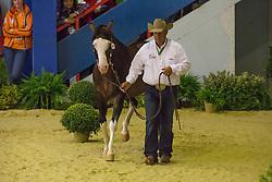 Shawn Flarida, (USA), Spooks Gotta Whiz - Horse Inspection Reining  - Alltech FEI World Equestrian Games™ 2014 - Normandy, France.<br /> © Hippo Foto Team - Dirk Caremans<br /> 25/06/14
