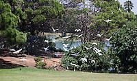 SANCTI PETRI-SPANJE - IBEROSTAR  Real Novo Sancti Petri Golf Club  . Hole 5.   COPYRIGHT KOEN SUYK