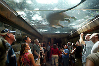 Sep 26, 2003; Las Vegas, Nevada, USA; The Lion Habitat located inside the MGM Grand Hotel Casino features a variety of lions including GOLDIE, a decendent of the studio's famous signature marquee lion Metro.  For free guests can be encircled by lions at anytime via a see through walk-way tunnel and walls that have two inches of glass that seperates the tourists from the animals.  This attraction will remain open despite the accident with the Royal White Lion that attacked Roy (of Siegfried & Roy) on October 3rd infront of a live audience at the Mirage down the street on the Las Vegas Strip.  News.