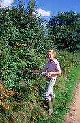 ATBK0A Girl picking blackberries from hedgerow Suffolk England