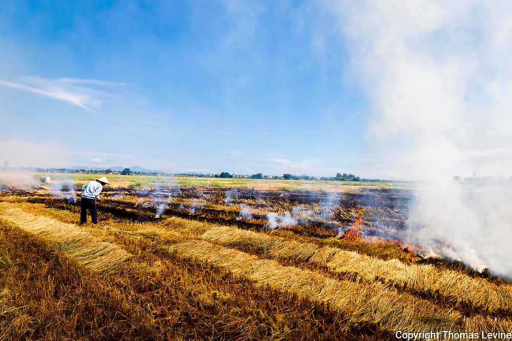 Fire burns in rice field in Hoi An, Vietnam. with farmer working.