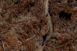 Riders pass through a section of burnt trees during stage 1 of the 2017 Absa Cape Epic Mountain Bike stage race held from Hermanus High School in Hermanus, South Africa on the 20th March 2017<br /> <br /> Photo by Greg Beadle/Cape Epic/SPORTZPICS<br /> <br /> PLEASE ENSURE THE APPROPRIATE CREDIT IS GIVEN TO THE PHOTOGRAPHER AND SPORTZPICS ALONG WITH THE ABSA CAPE EPIC<br /> <br /> ace2016