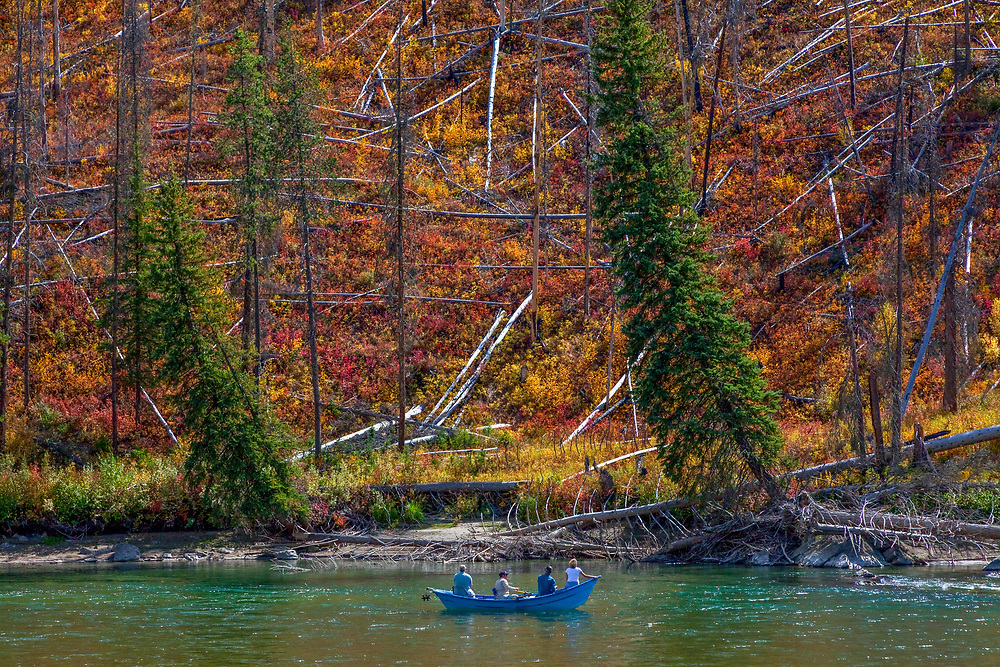 Drift boat fishermen and a woman passenger admire the amazing fall colors along the banks of the Snake River near Jackson Wyoming. Licensing and Open Edition Prints.
