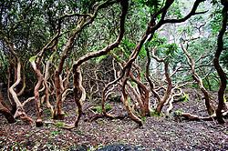 Woodland on the Portmeirion estate, Gwynedd, North Wales, UK.