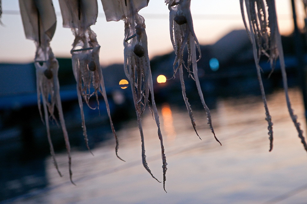 Detail of dried cuttle fish hanging at the port in the evening light / Samcheok, South Korea, Republic of Korea, KOR, 05 October 2009.
