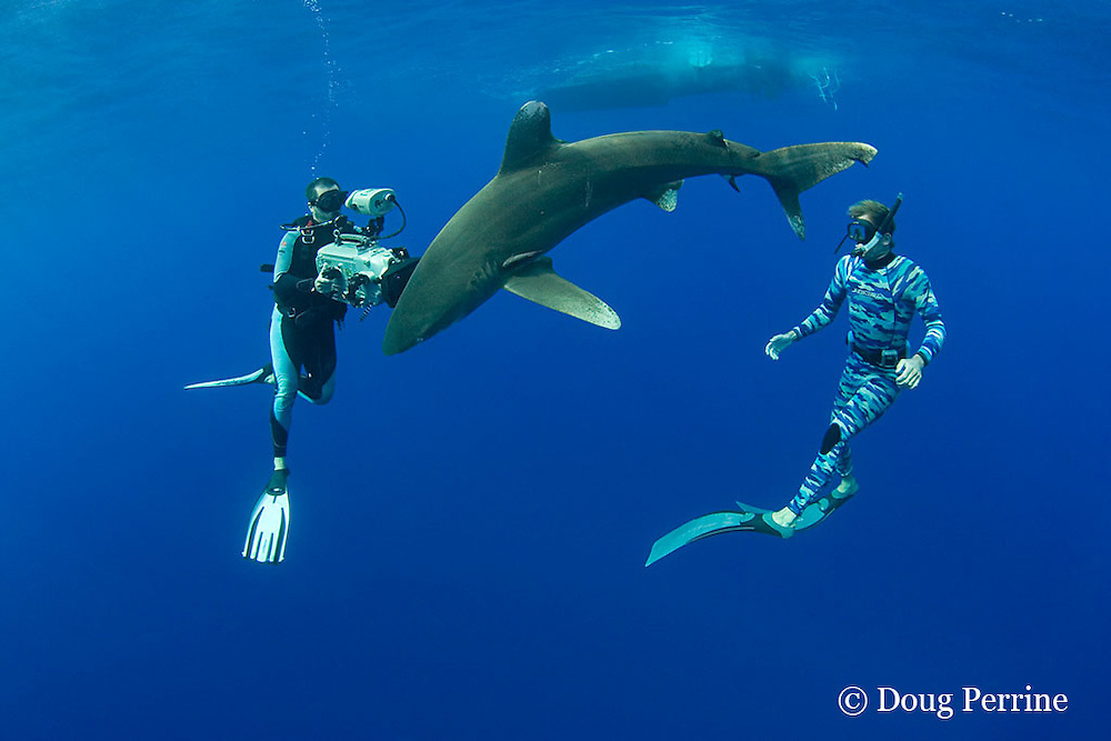 Scubazoo cameraman Jason Isley films Jimmy Hall with oceanic whitetip shark, Carcharhinus longimanus, off the Kona Coast of Hawaii Island ( the Big Island ), Hawaiian Islands ( Central Pacific Ocean ) MR 383, 384