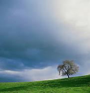 Stanford hills above Palo Alto, California.