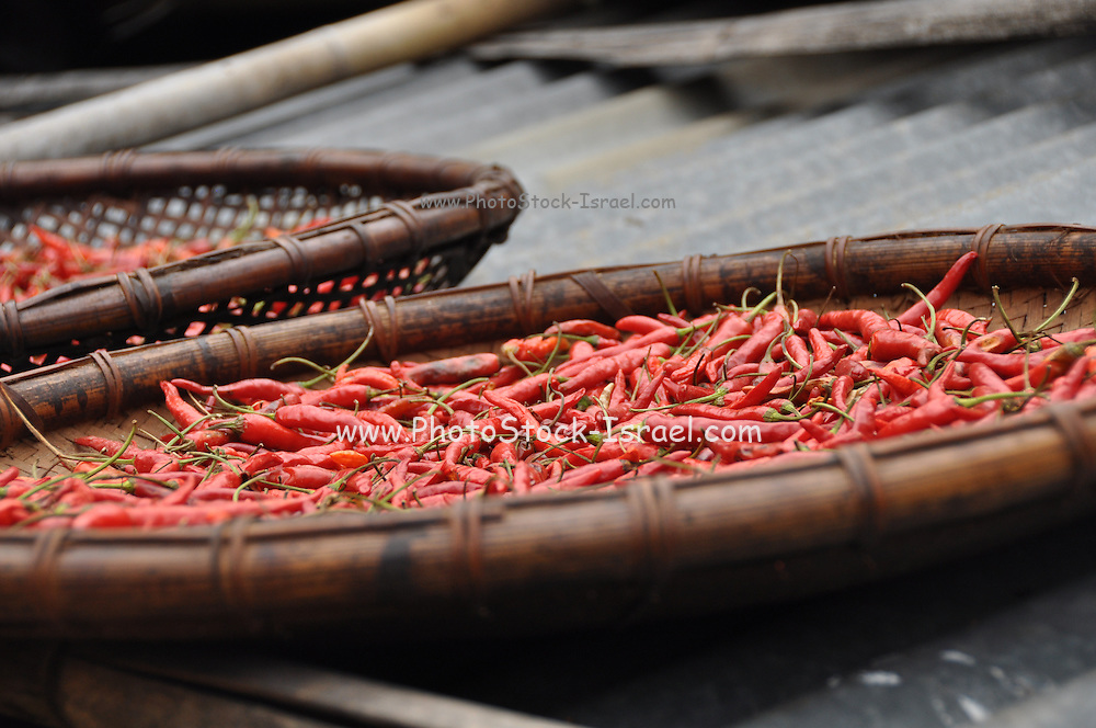 Hot chilli peppers for sale at a market in Laos