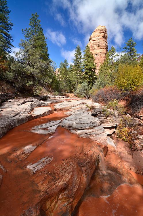 Desert stream, Hammond Canyon, Utah.