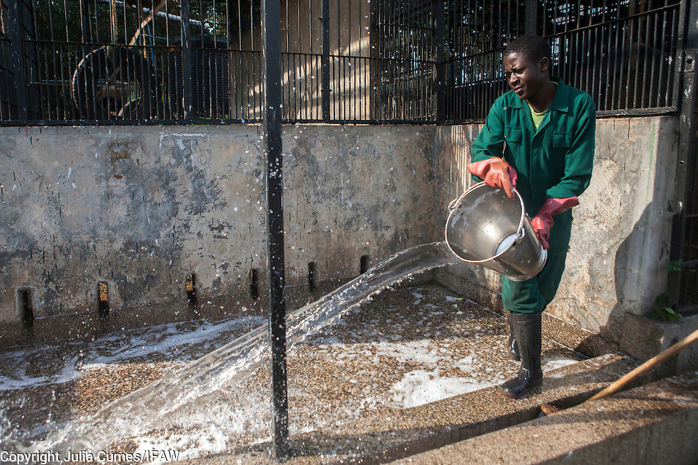 Care givers wash the outside of the chimp enclosures at the Ngamba Island Chimpanzee Sanctuary in Lake Victoria, Uganda. 03/15 Julia Cumes/IFAW