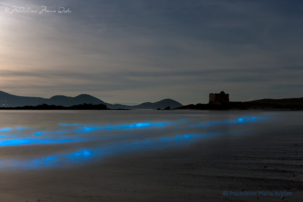 """BIOLUMINESCENCE in the heart of Ballinskelligs, Southwest Kerry, Ireland. <br /> <br /> A natural phenomenon lights up the water of Ballinskelligs Beach, making the sea shine with a surreal blue light.<br /> <br /> The surreal scene arises not from magic, but from plankton that have evolved to glow in order to startle or distract fish and other potential predators. Some scientists call it the """"burglar alarm effect"""": by lighting up, the plankton draw even larger predators that, in turn, eat the animal threatening them. The phosphorescence only occurs when the microorganisms, which exist worldwide, are agitated – such as when the water crashes onto the shore, someone steps on the wet sand or a paddle hits the waves."""